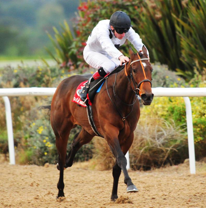 TATTERSALLS DECEMBER MARE SALE: Marsha and Reflection in the ring
