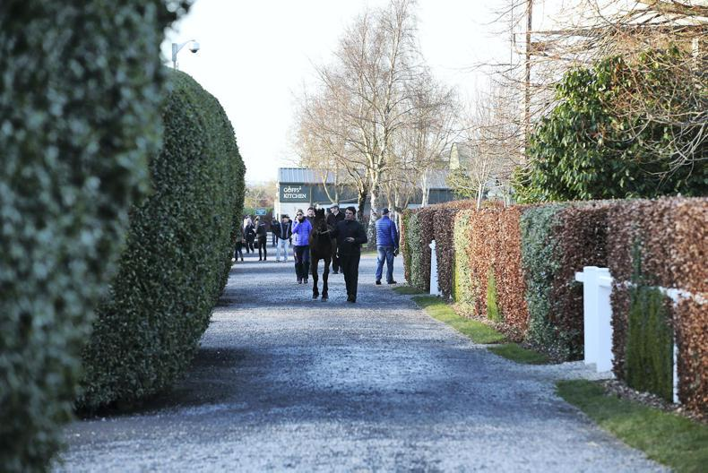 First-crop Outstrip colt leads the way as clearance rate rises