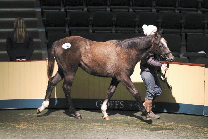 GOFFS NOVEMBER FOALS: Widespread approval for format changes