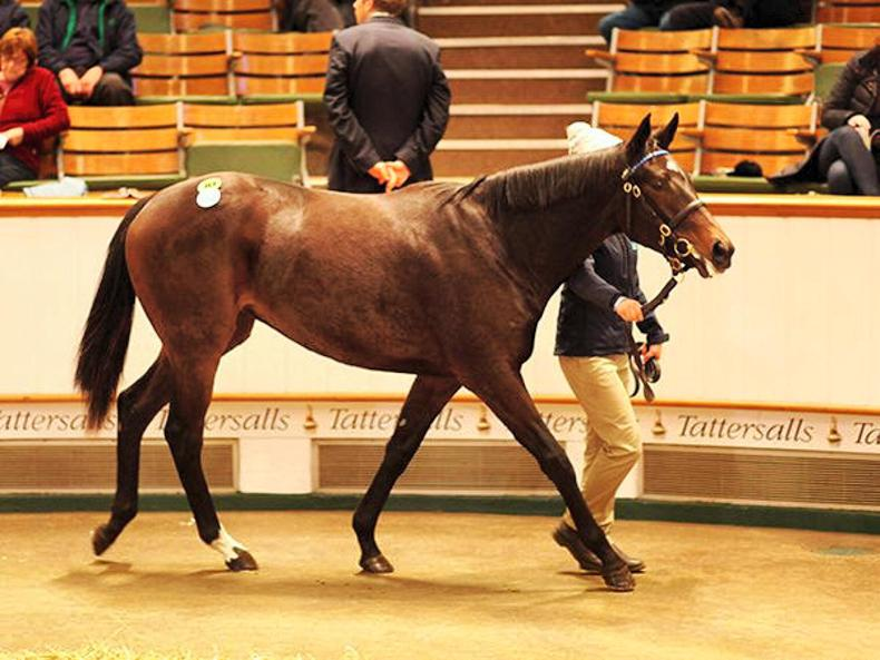 400,000gns Kodiac half-sister to Barney Roy tops December Yearling Sale