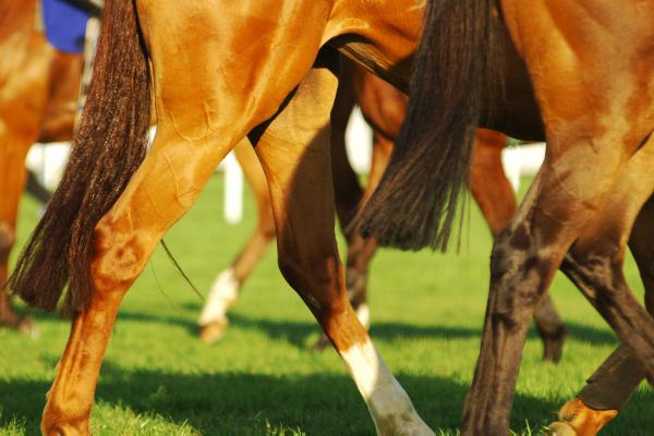 The following horses noted by our reporters
