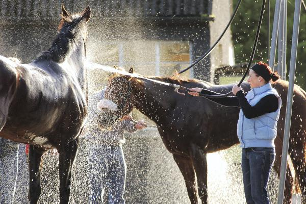 Dealing with heat exhaustion in horses