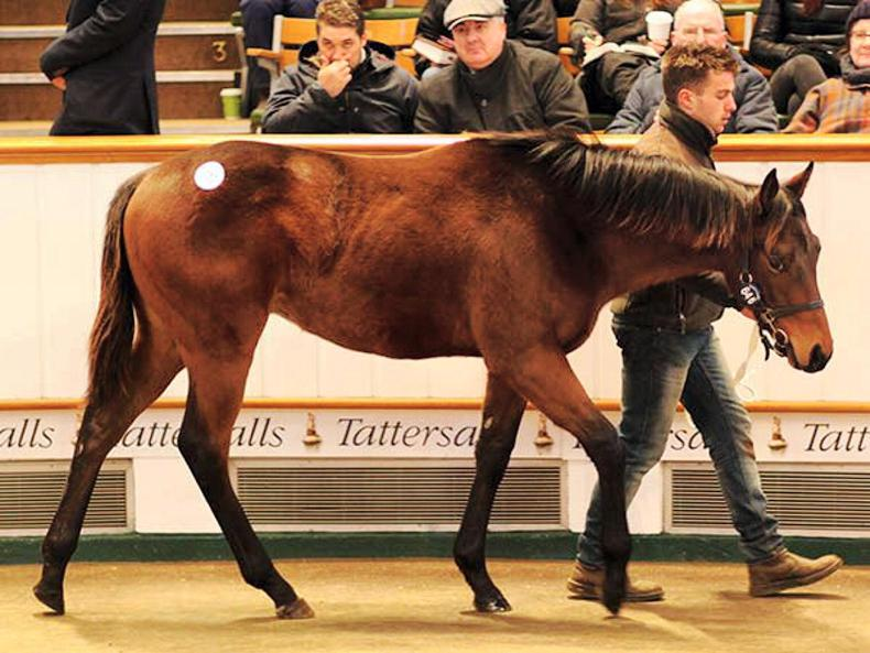 Irish stallions dominate on day two of December Foal Sale in Newmarket