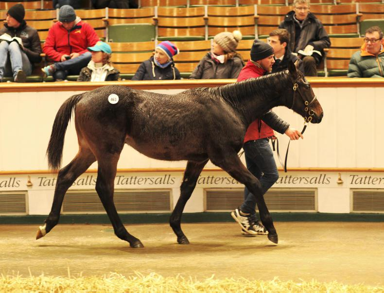 TATTERSALLS DECEMBER FOAL SALE: Son of Farhh tops day one