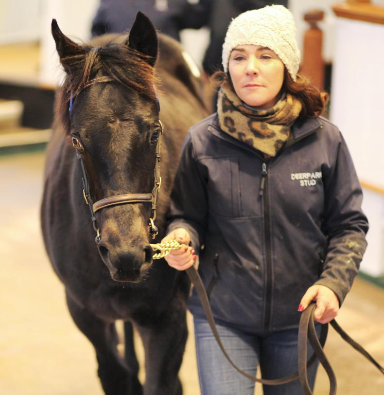 Godolphin spend big for Golden Horn's first crop star