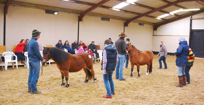 AROUND THE COUNTRY:  Kerry Bog Pony judging seminar a hit
