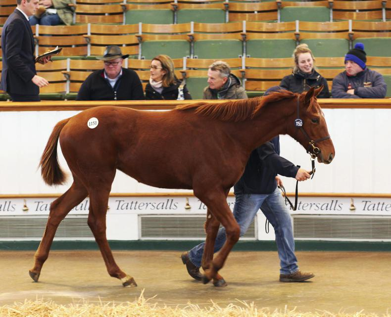 December Foal Sale end with record average price