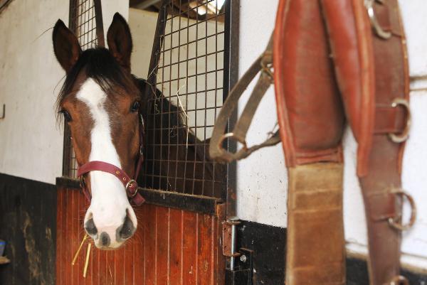 Horse Sport Ireland stallion inspections