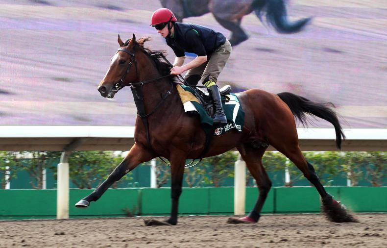 Highland Reel primed for Hong Kong Vase