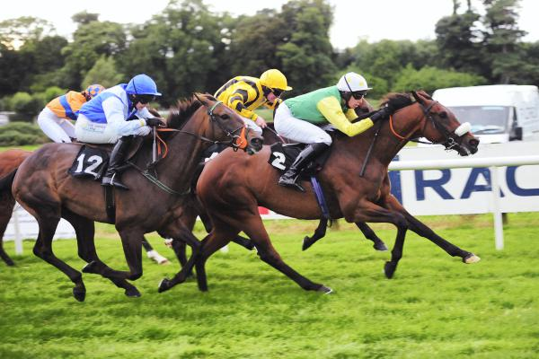 Ted Veale worth banking on in beginners' chase