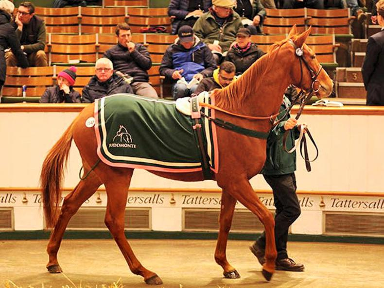 Juddmonte draft lights up day three of December Mare Sale