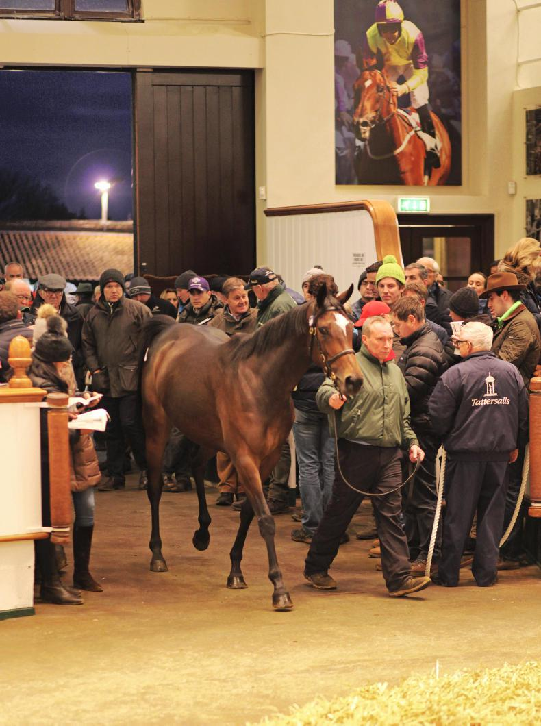 TATTERSALLS DECEMBER MARE SALE: Intricately dominates strong opener