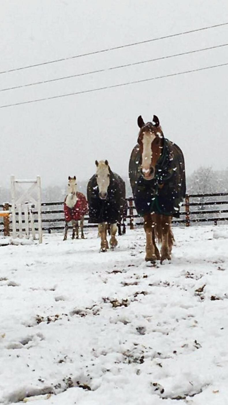 PONY TALES:  Taking it easy in the snow....