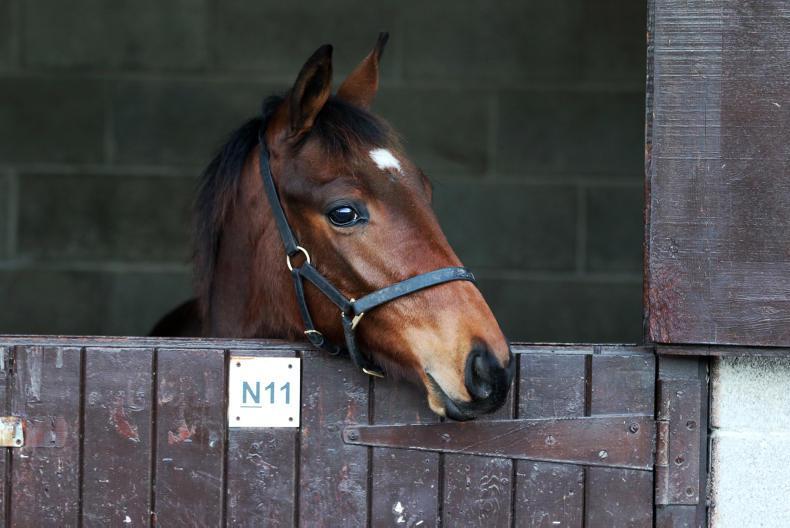 GOFFS: Demand for National Hunt foals soars at December Sale