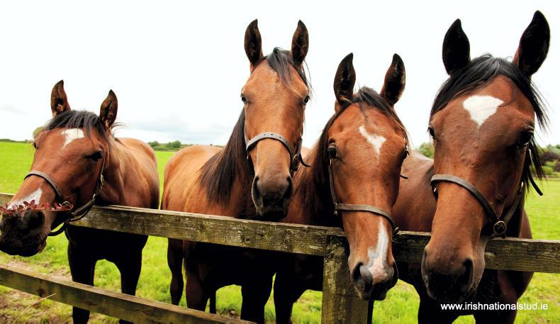 HORSE SENSE: Equine waste – a new use in renewable energy generation?