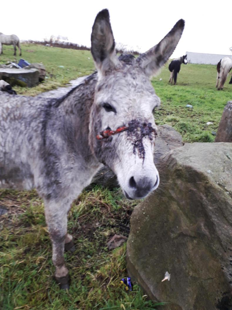 NEWS:  Equine welfare horror in Clonmel