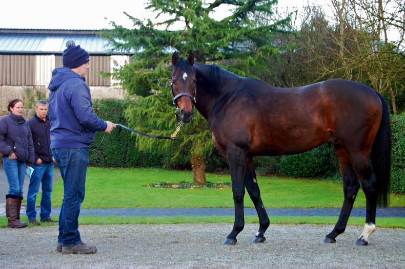 Coolmore NH fees released