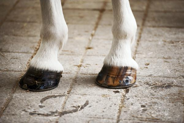 Top riders endorse Ice Vibe circulation therapy boot