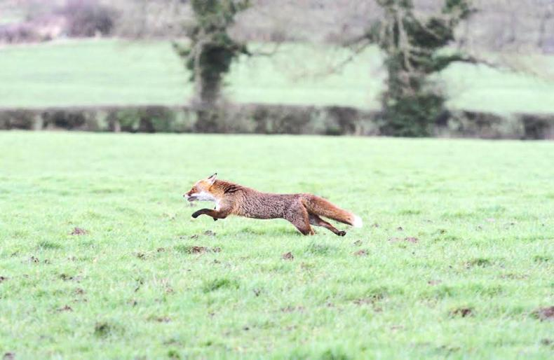 HUNTING: ON POINT - News & Views