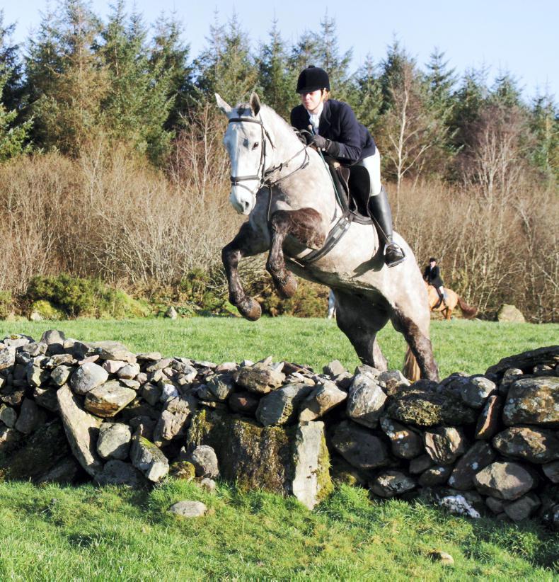 Irish Horse World Fixtures, January 20th 2018