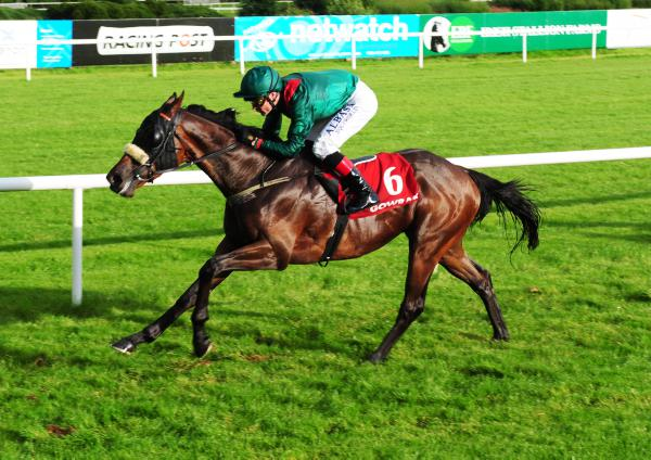Quality form horses in new Leopardstown sale