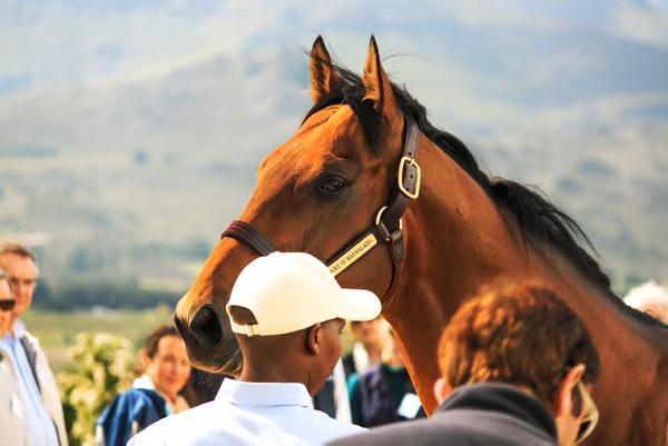 The Duke impresses on stallion day