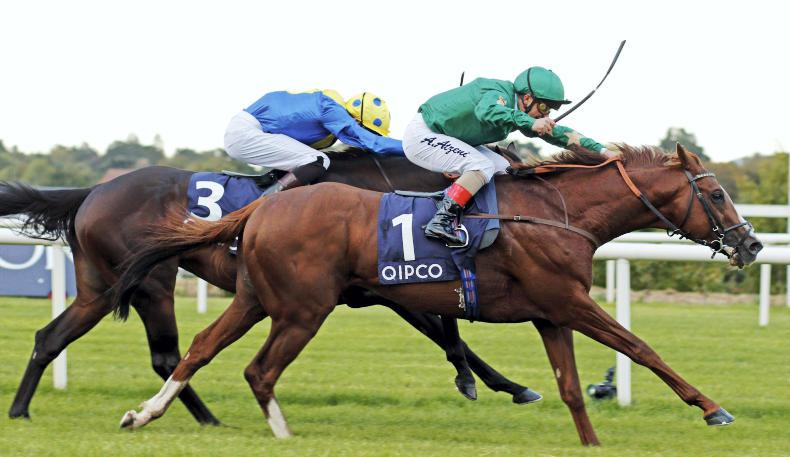 DECORATED KNIGHT : Standing at Irish National Stud