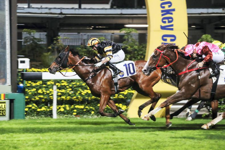 Callan hopes return to Happy Valley can spark revival from Powermax