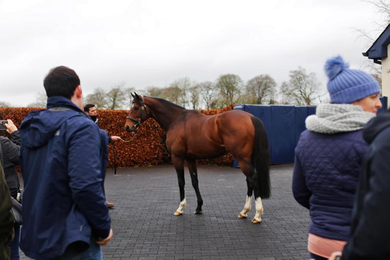 CHURCHILL : Standing at Coolmore Stud