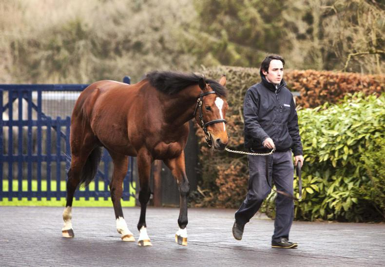 GLENEAGLES : Standing at Coolmore Stud
