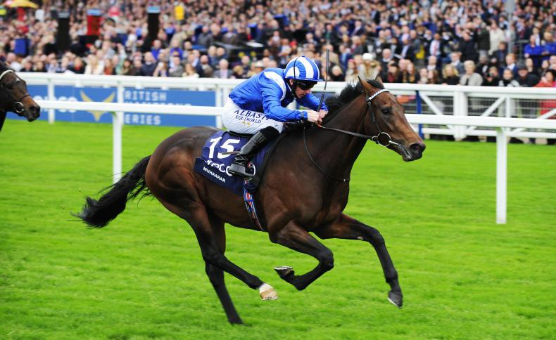 SALES 2017: Muhaarar sprints to the top of the foal standings