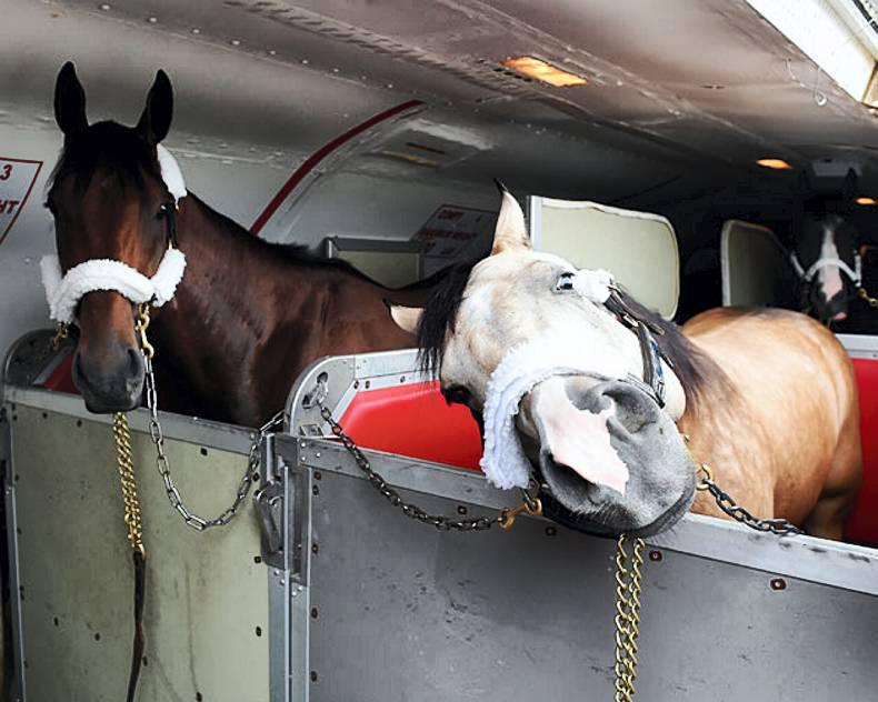HORSE SENSE: Equine transport legislation translated