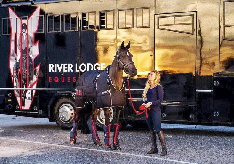 HORSE SENSE TRANSPORT: The professionals travel in comfort and style