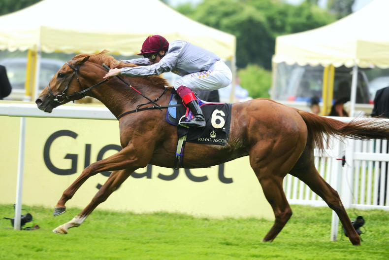 SIRE REVIEWS: GALILEO GOLD Standing at Tally-Ho Stud