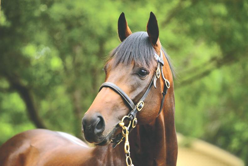 SIRE REVIEWS: EPAULETTE Standing at Kildangan Stud