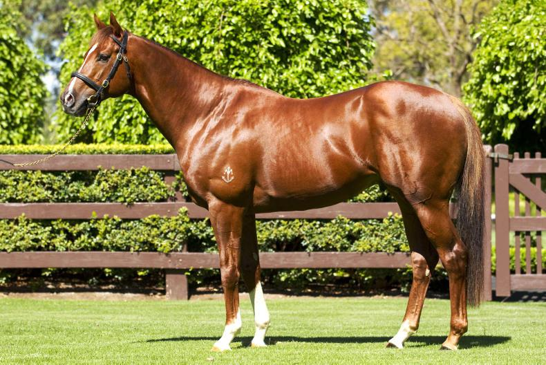 SIRE REVIEWS: STARSPANGLEDBANNER Stands at Coolmore Stud