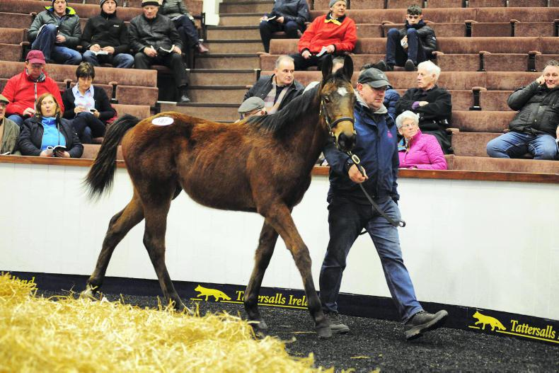 SALES: Standout lots at Fairyhouse