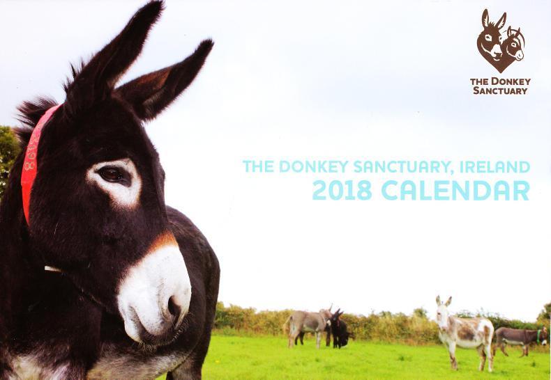 PONY TALES:  Donkey calendar a real winner!