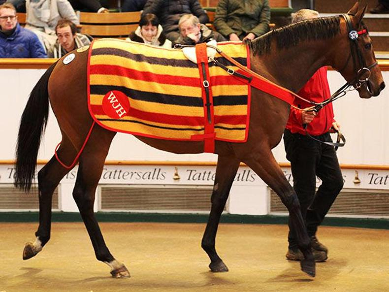 VIDEO: Willie John's spectacular sale delights Tattersalls