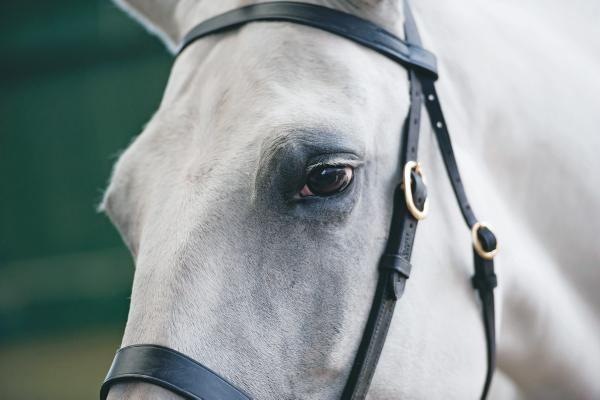 Half-bred performance foals showcase