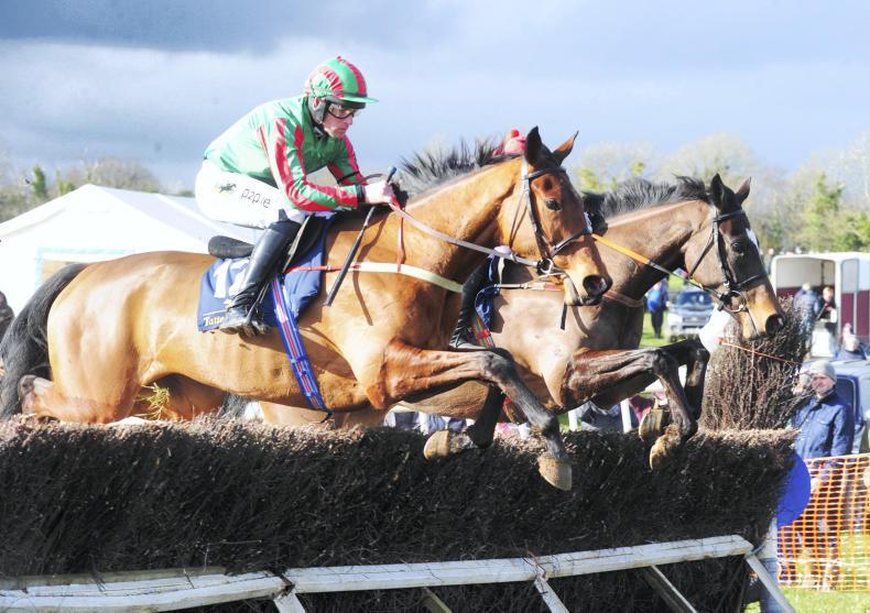 BALLINABOOLA SUNDAY WEXFORD FOXHOUNDS: Envoi Allen destined for a bright future