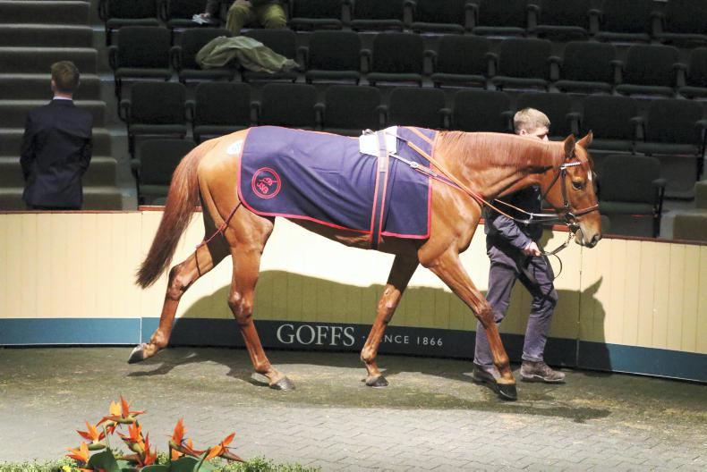 Glamorous Approach sold to Ballylinch Stud for €280,000 at Goffs