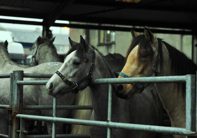 SALES PREVIEW: Quality ridden ponies on offer at Clifden sales