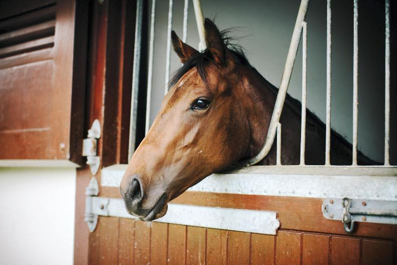 HORSE SENSE: Preparing for you mare to foal