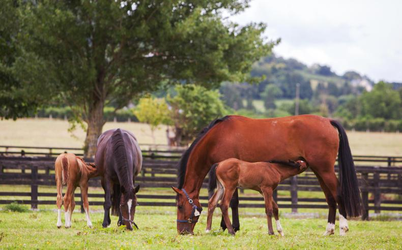 HORSE SENSE: A 'hands on' approach to feeding the pregnant mare