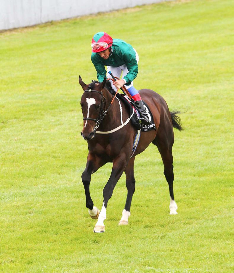 SIRE REVIEWS: Fulbright – Standing at Kildangan Stud