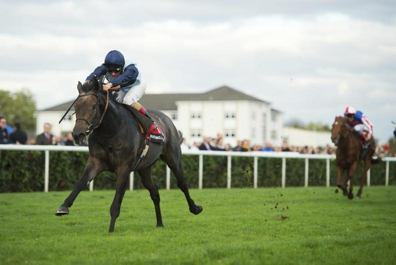 SIRE REVIEWS: Kingston Hill – Standing at Coolmore Stud