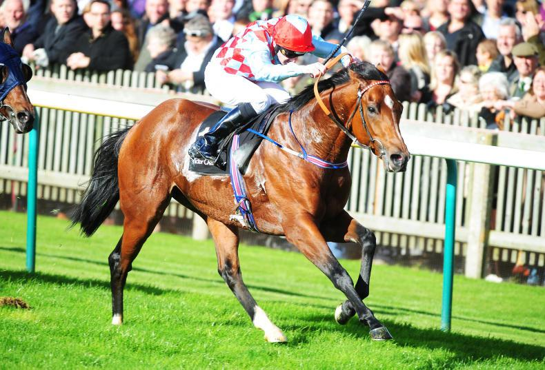 SIRE REVIEWS: Red Jazz : Standing at Ballyhane Stud