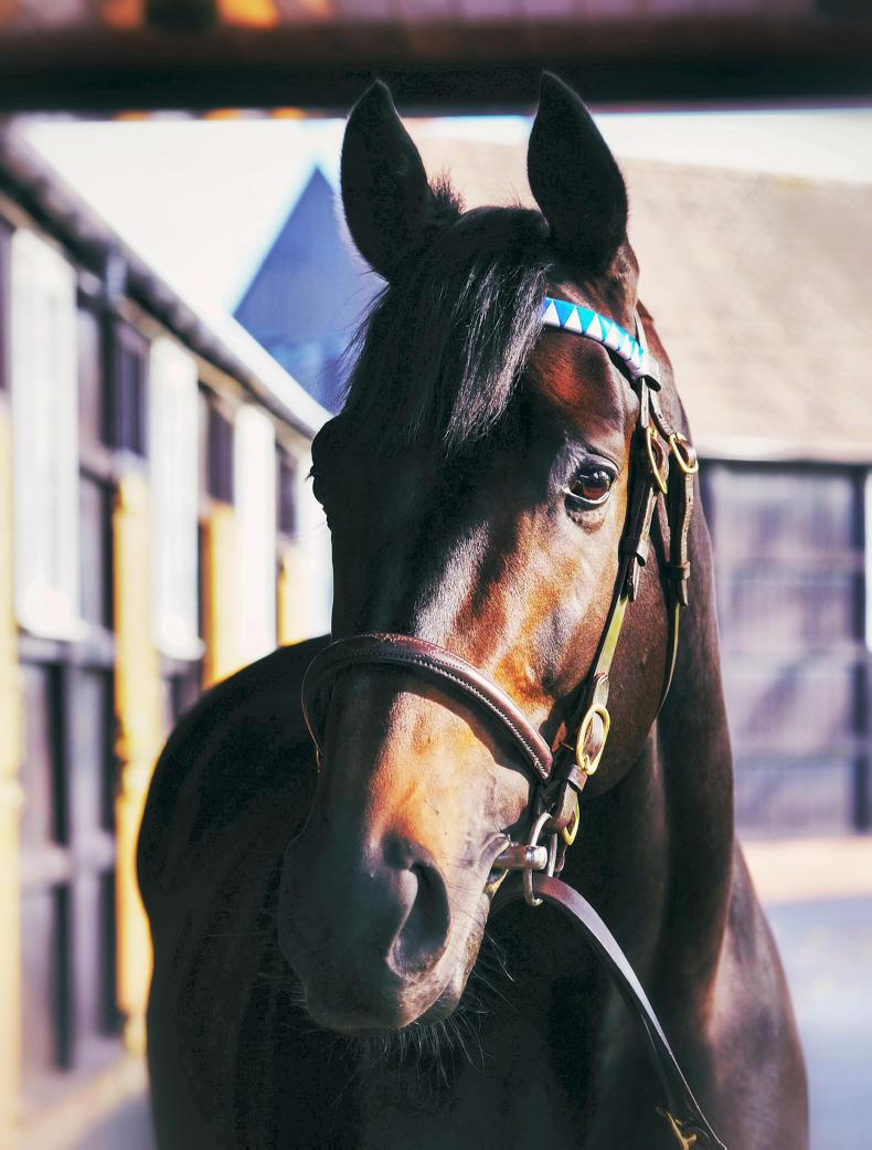 SIRE REVIEWS: Golden Horn : Standing at Dalham Hall Stud