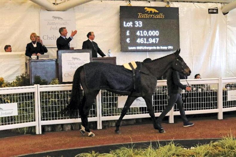 Image result for dlauro horse